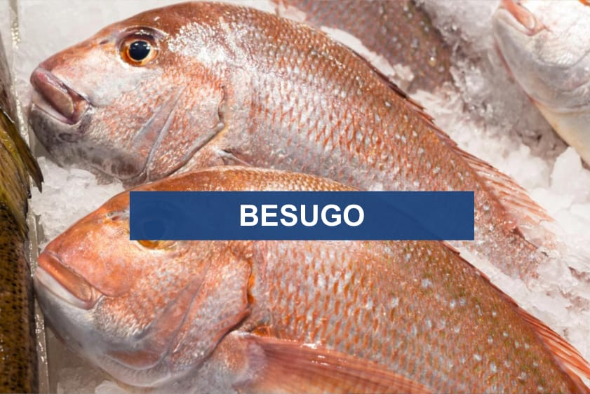 Besugo Red Snapper Pagrus Pagrus POLO SUR